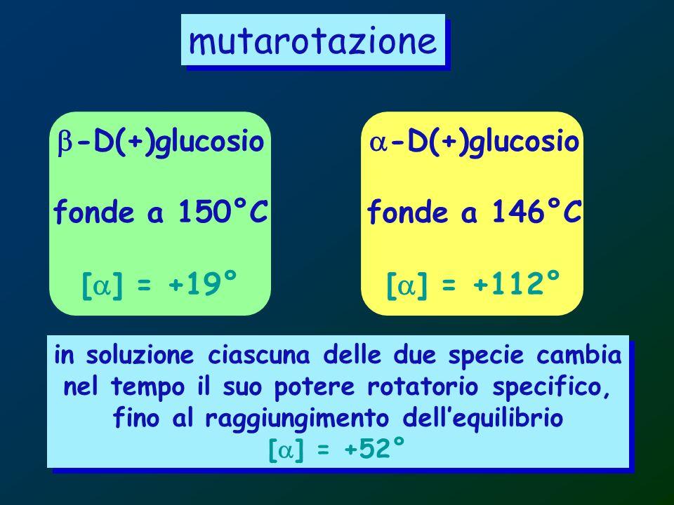 mutarotazione b-D(+)glucosio fonde a 150°C [a] = +19° a-D(+)glucosio